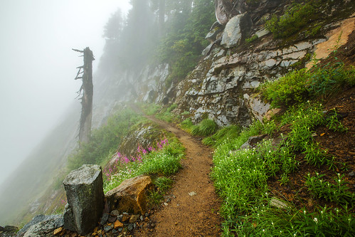 fog day trail pacificcresttrail pct wildflowers kendallkatwalk alpinelakeswilderness explored