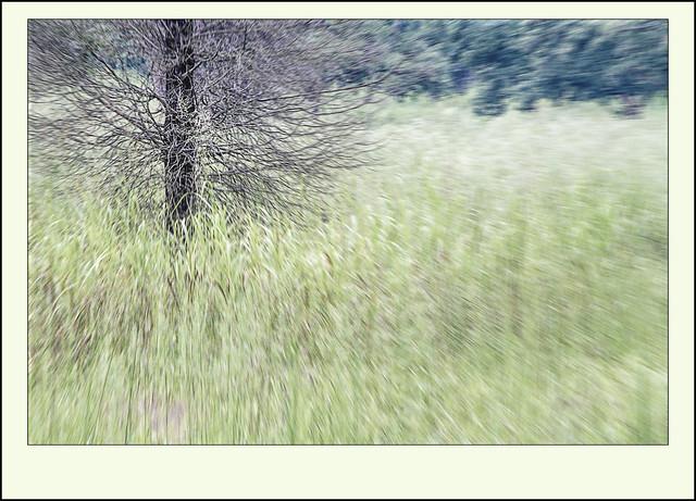IMAGE: https://farm4.staticflickr.com/3839/15013960566_e5070e1d0a_z.jpg