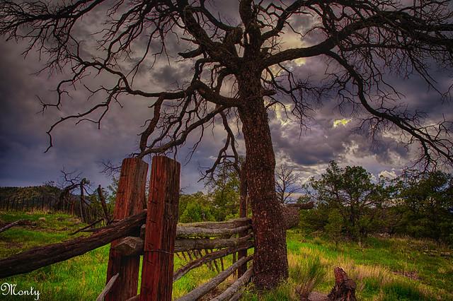 Strayhorse, Arizona