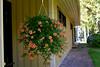 Flowers in september...