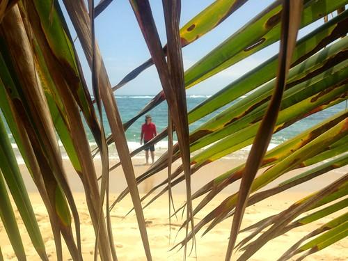 where am I? through the palms