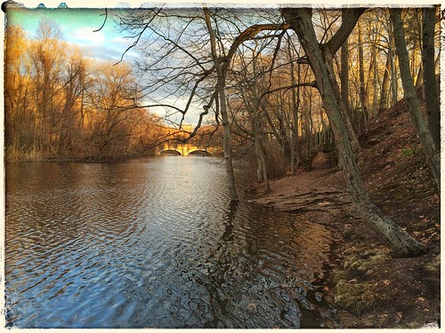 trees water reflections bridges ct newhaven ripples millriver riverbanks eastrockpark goldenglow themagichour thegoldenhour nhv snapseed gscia