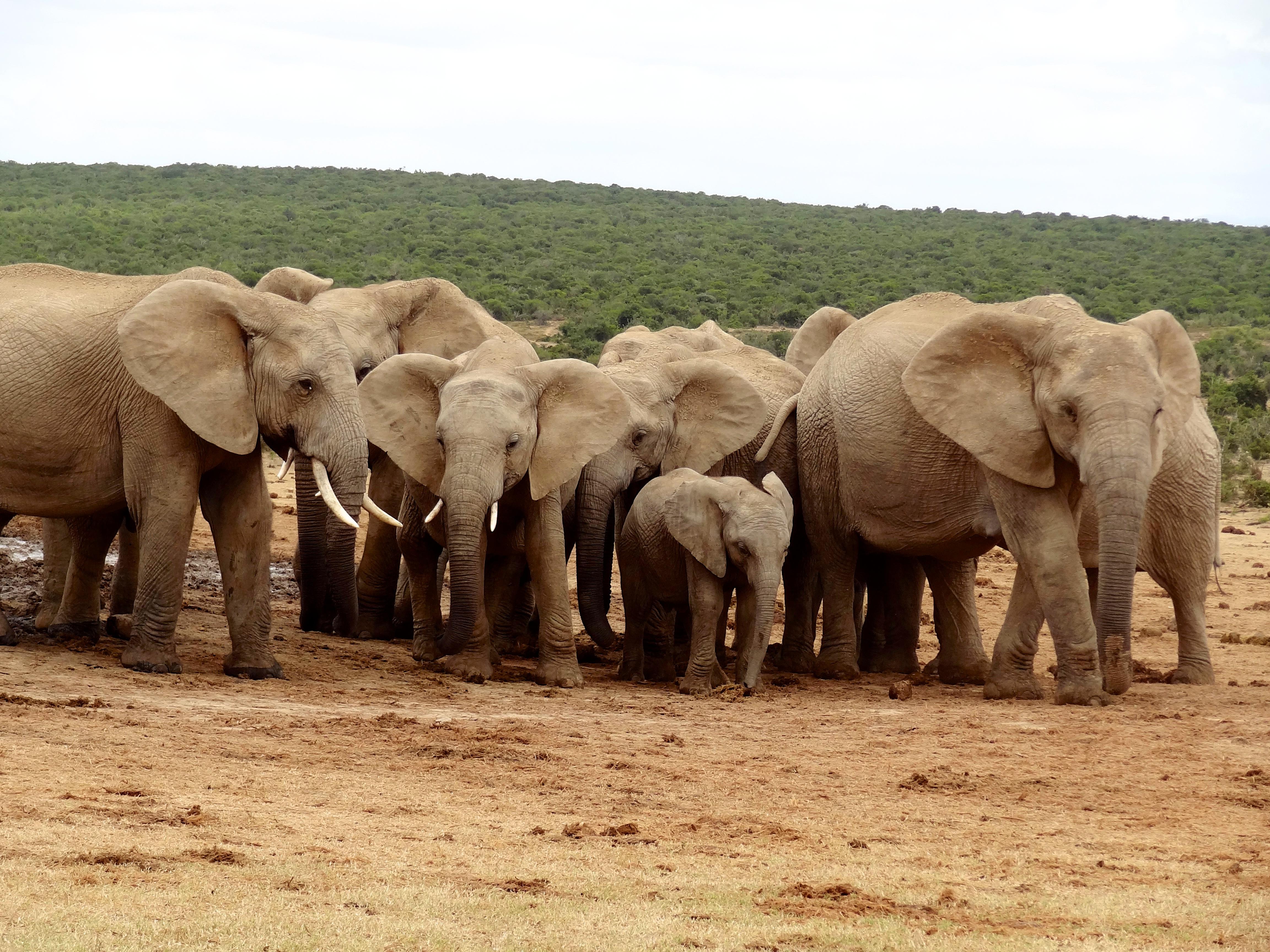Addo Afrique, Addo Elephant National Park