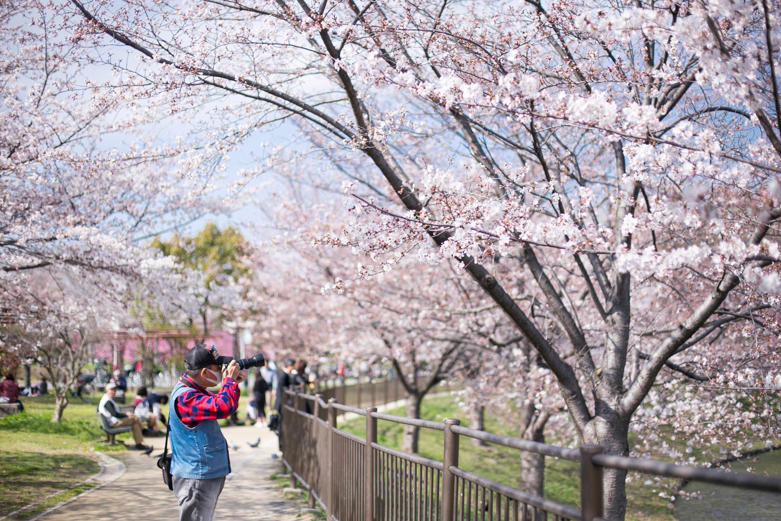 Sakura Tsurumi Ryokuchi Park