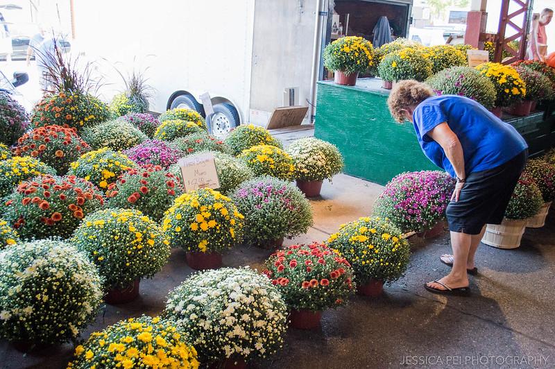 flowers plant shop farmer's market