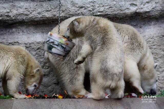 Eisbären Giovanna mit Nela&Nobby 2014_09_10 401