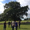 Earlham Park oak pollard