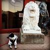 Roar. #pandadontcare #pandadog #pDoggie #sweetP #dog #California #iPhone6 #obsessivehobbyist