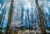 Winter is coming by Karl.T - Photographie