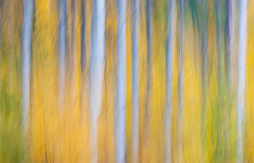 autumn green fall yellow fallfoliage abstracts washingtonstate autumncolor aspentrees aspenfallcolor canonrebelxsi fresnatic