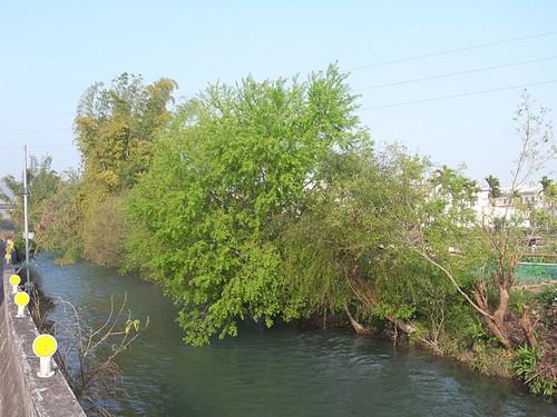 台中葫蘆墩圳上游,引自大甲溪水。
