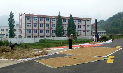 Zhejiang-Yantoucun (120)