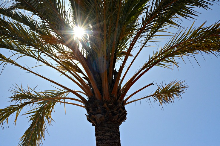 DSC_2745 palmtree harbourclub ibiza