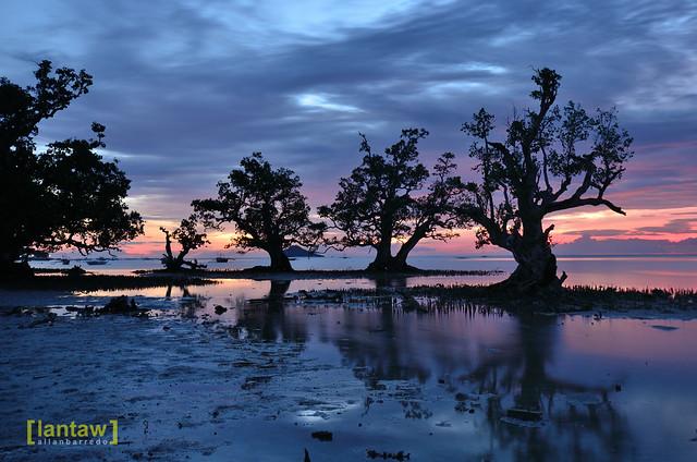 Mangrove Row II