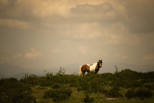Wild wild horses (Monte Santiago)