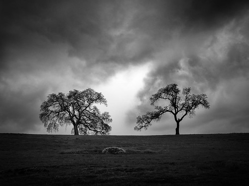 california trees two sky bw tree nature monochrome clouds outdoor geotag treescape 2014 em5 1235mm flvonmirikr
