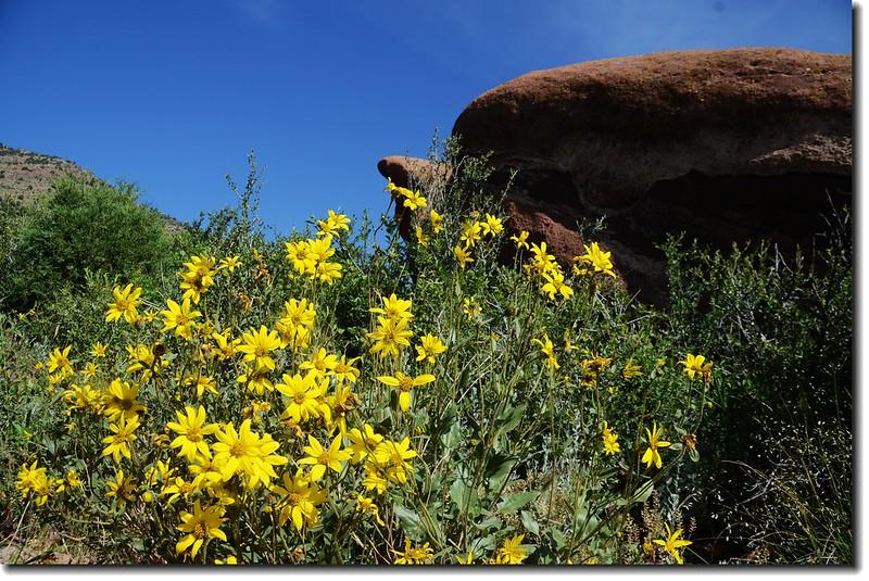 Red Rocks Trail 1