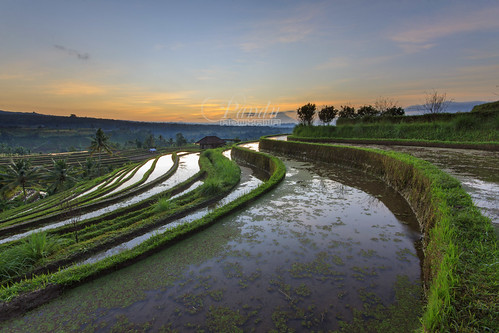 bali reflection sunrise indonesia landscape photography tour village guide curve ricefield jatiluwih baliphotography balitravelphotography baliphotographytour baliphotographyguide