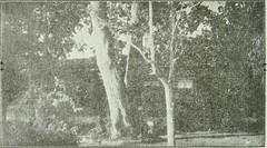 """Image from page 829 of """"Os Andradas; obra commemorativa do 1. centenário da independêndia do Brasil, mandada executar pela Câmara municipal da cidade de Santos"""" (1922)"""