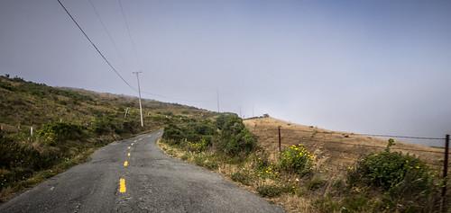 Coastal Redwoods and Fog-108