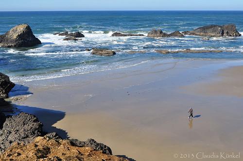 beach oregon coast sealrock