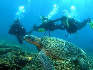 "<img src=""padi-diving-one-tree-bay-tioman-island-malaysia.jpg"" alt=""PADI diving, One Tree Bay, Tioman Island, Malaysia."" />"