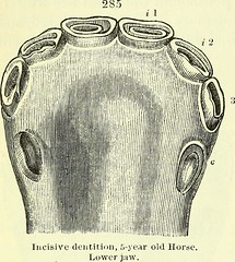 """Image from page 371 of """"On the anatomy of vertebrates [electronic resource]"""" (1866)"""