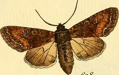 """Image from page 268 of """"Sammlung europscher Schmetterlinge, errichtet von Jacob Hner in Augsburg"""" (1793)"""