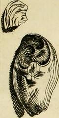 """Image from page 312 of """"Mémoires de l'Académie royale des sciences, des lettres et des beaux-arts de Belgique"""" (1783)"""