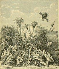 "Image from page 457 of ""The transformations (or metamorphoses) of insects (Insecta, Myriapoda, Arachnida, and Crustacea) : being an adaptation, for English readers, of M. Émile Blanchard's ""Metamorphoses, moeurs et instincts des insects;"" and a compilatio"