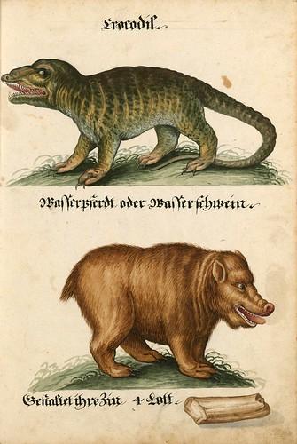 006-Aquarelle von Säugetieren…- e-manuscripta-Bibliothèque électronique suisse