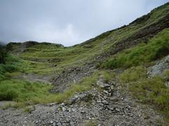 林務局提供的大白山礦業所進行的植栽復育。(圖:林務局)