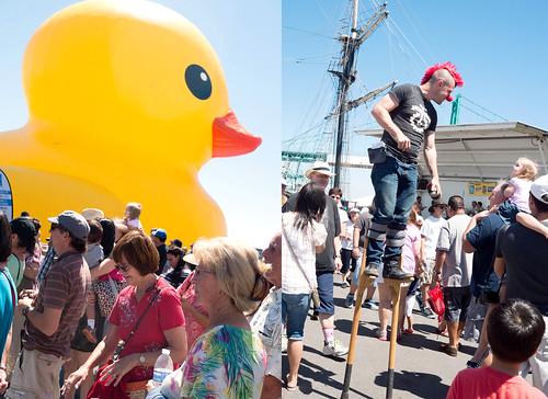 duck41