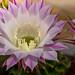Flowerpower :-)