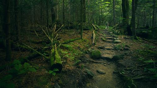 travel trees america forest walking nationalpark moss woods rocks nps hiking path stones walk northcarolina hike adventure trail journey greatsmokymountains forneyridgetrail andrewsbald
