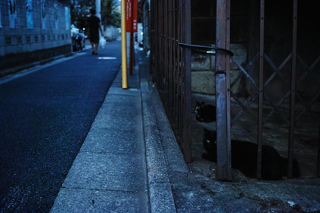 20140821_01_Black Cat