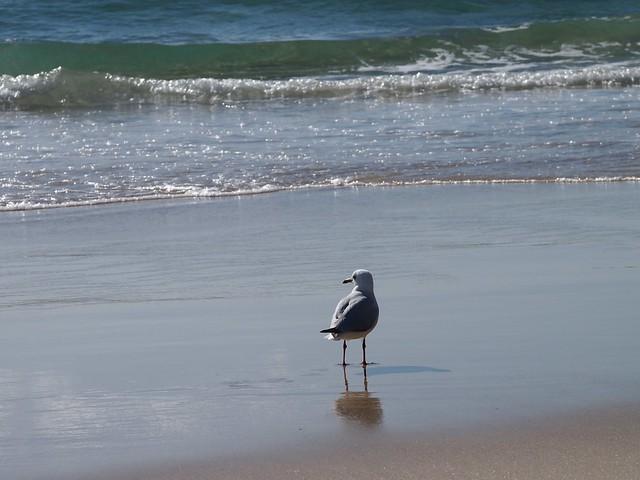 Mr Seagull