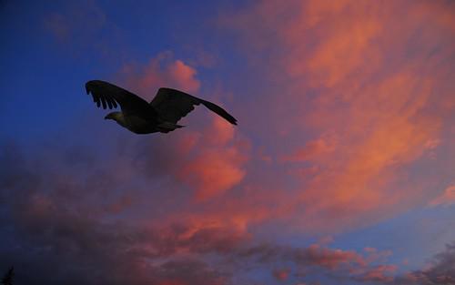 sunset rwanda africanfisheagle akageranp