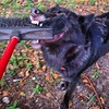 Let go!  #lunathewolfdog