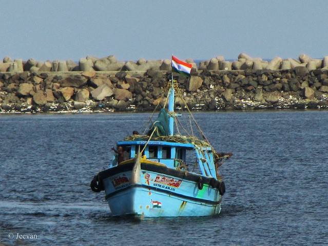 A boat arrives @ Kasimedu Fishing harbor