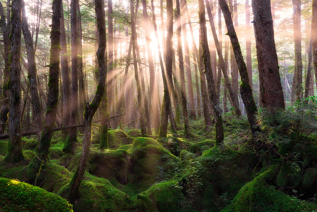Sunrise at the Mononoke Forest