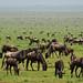 Serengeti National Park, Tanzania, 2014
