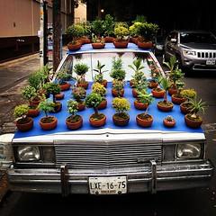 Chevrolet Bonsai