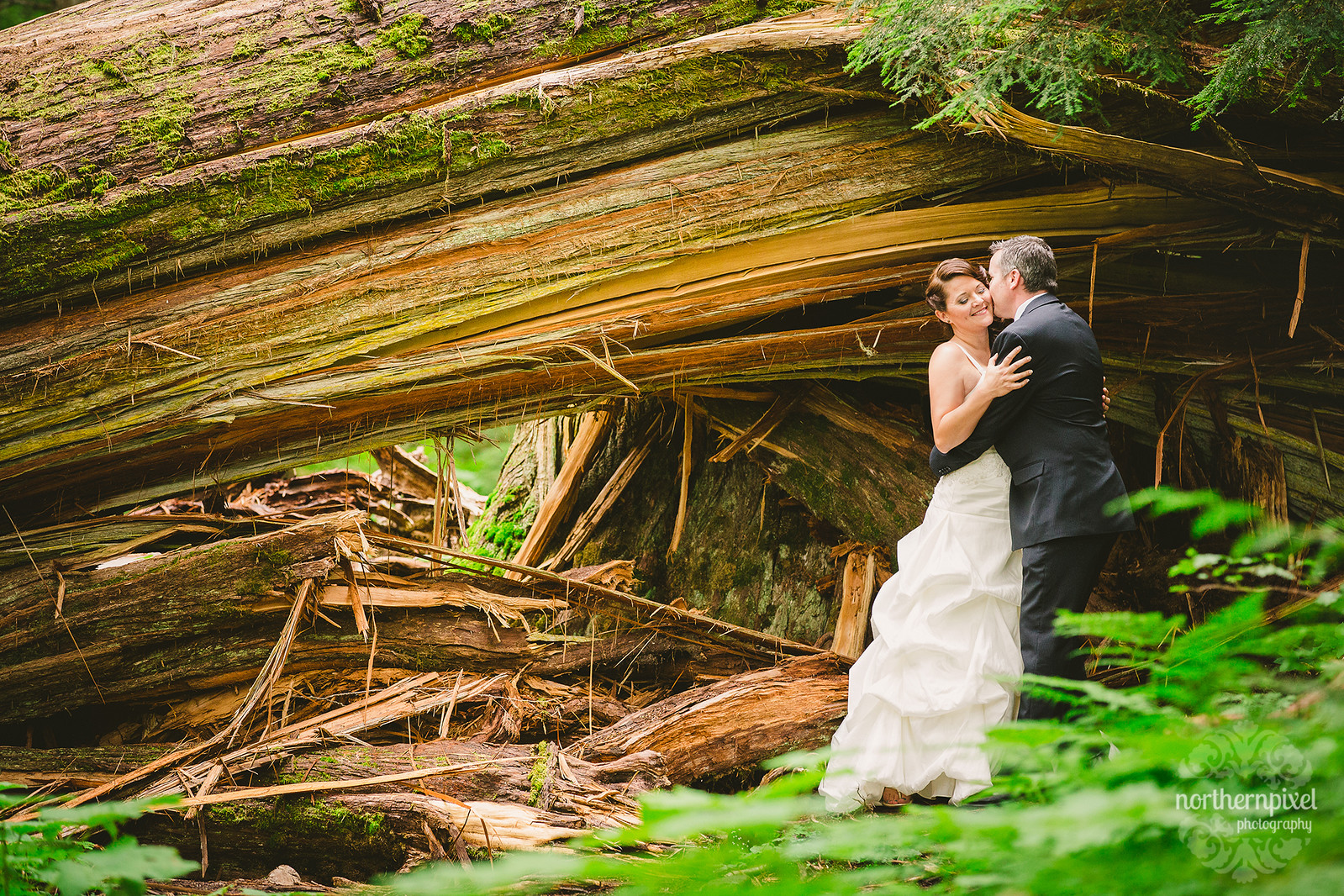 After Wedding Session at the Ancient Forest - British Columbia Wedding Photographer
