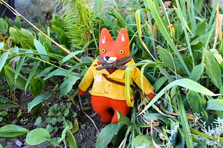 fall fashion fox fellow
