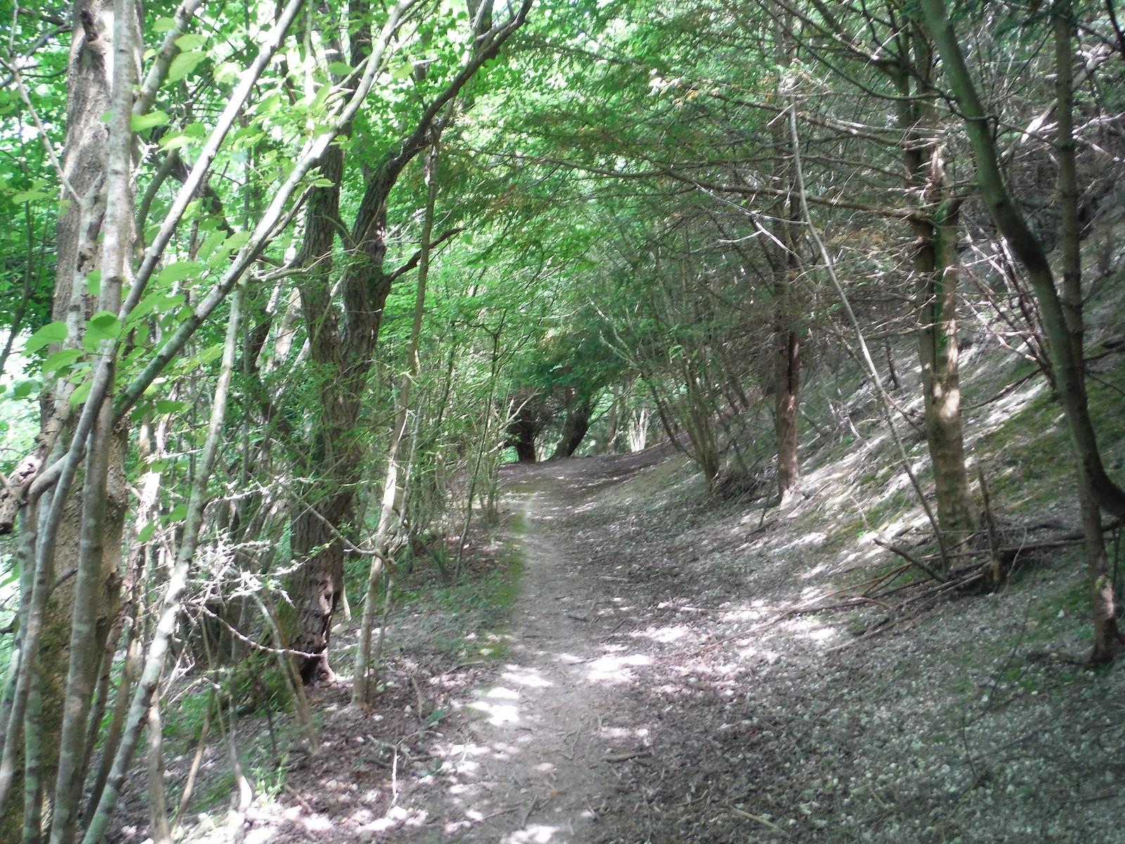 Descent to West Burton SWC Walk 217 Midhurst Way: Arundel to Midhurst