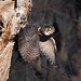 Great Horned Owls of New Jersey | 2017 - 5 by RGL_Photography