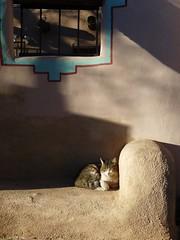 Catnap, Old Town Albuquerque