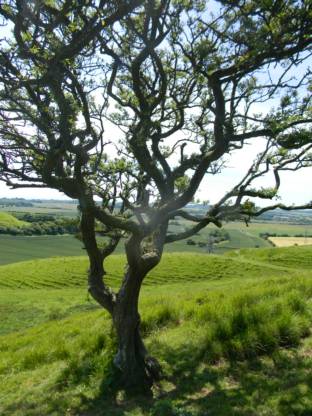 Tree where you veer Sandling to Wye