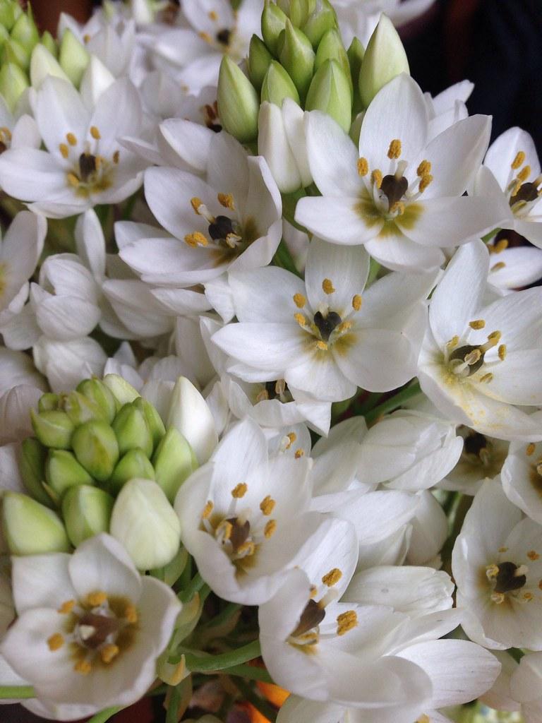 Flores [248/365] #lafotodeayer